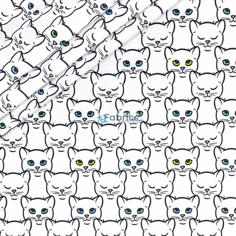 Koty z kolorowymi oczkami